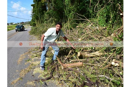 Tree lover protests 'butchery'