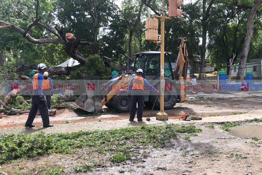 Tree falls on Martindale's Road