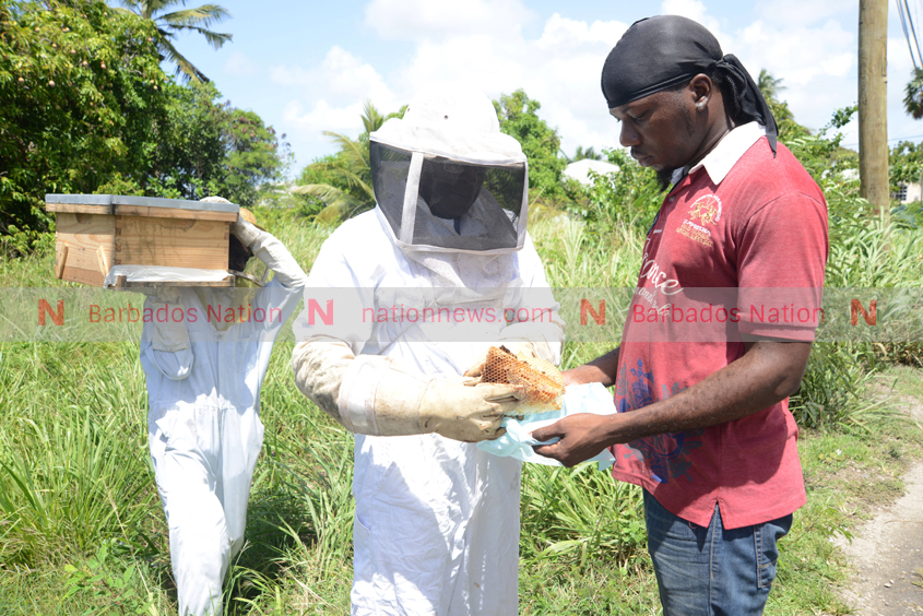 Protected bees from fogging