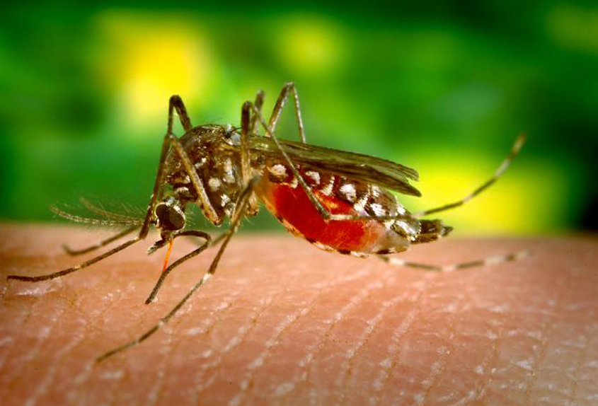 Girl dies from dengue in St Vincent