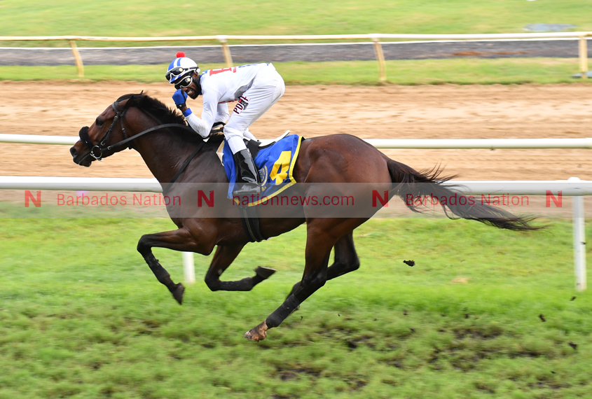 Cheeseman enters 24 horses