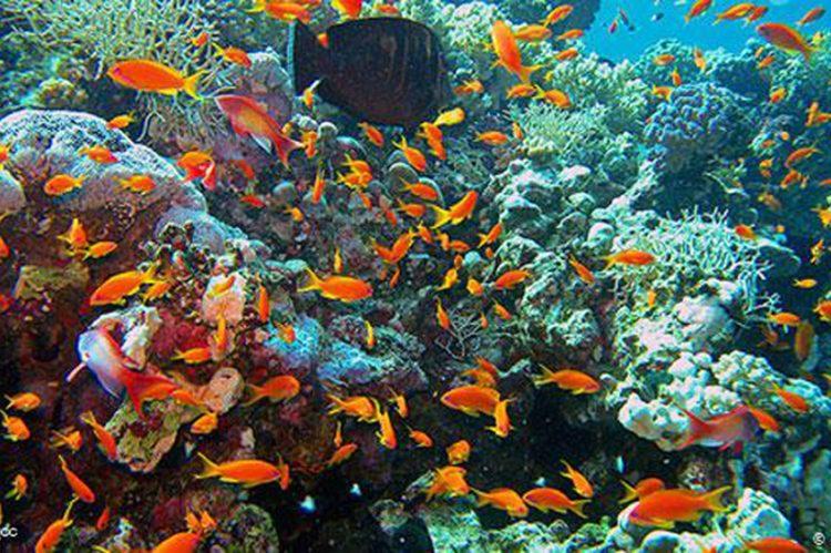 UN: Coral reefs in danger