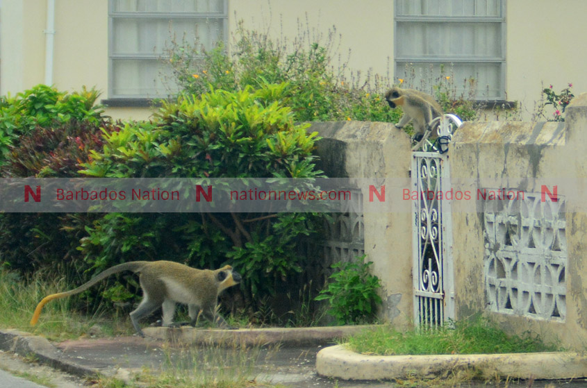 Monkeys 'a multifaceted issue'