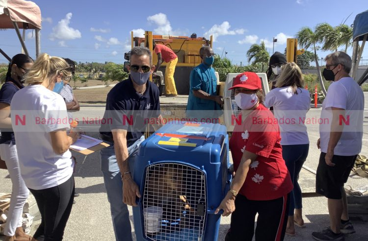 Animals heading to Canada in first Barbados ruffugee project