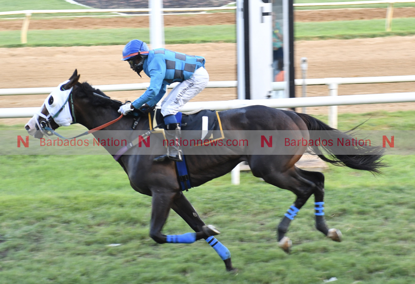 Bodie Tap tipped for Welcome Back win