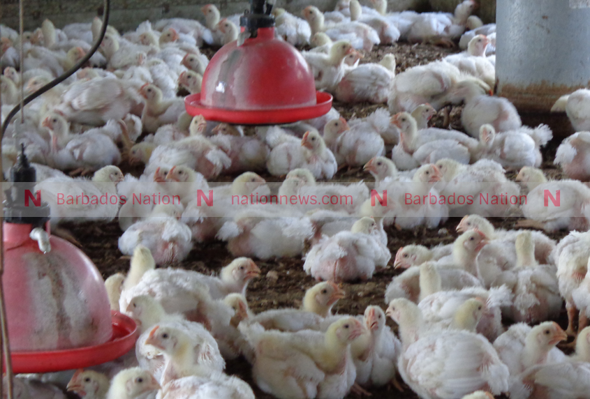 Poultry, pork prices may rise