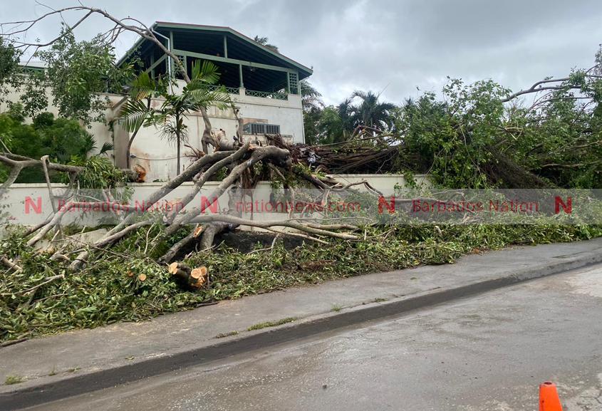 Fallen trees block road at Bagatelle