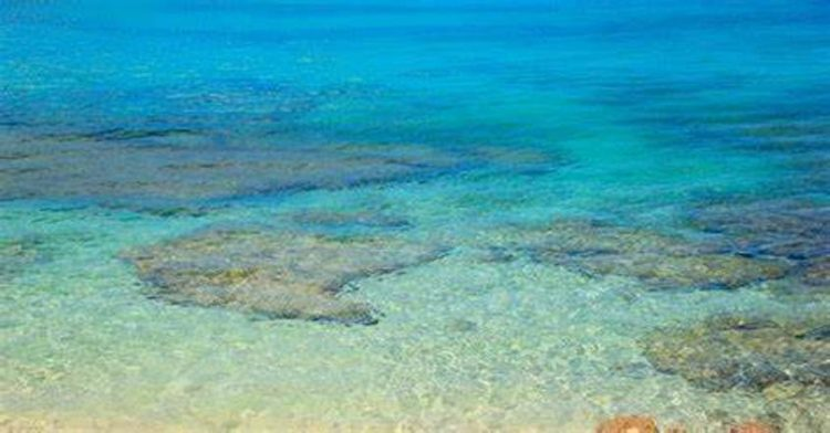 CARICOM observes World Oceans Day