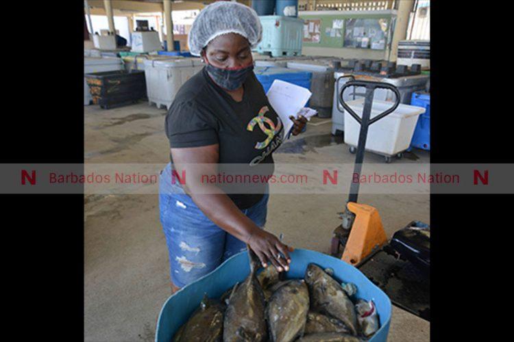 Amber fish plentiful but sales slow