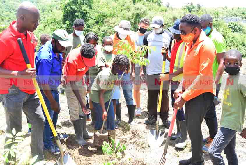 150 000 trees to be planted in September